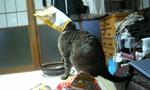 M cat.jpg