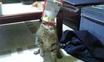 M cat2.jpg