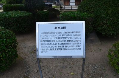 DSC_5582_R.JPG