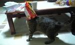 M cat3.jpg